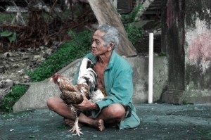 This Balinese man was showing off his star rooster.