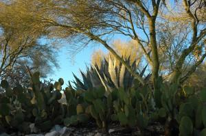 Front yard of the Arizona house.