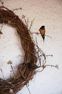 Swallow at Ojo Caliente