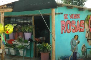 Town of Rosa - Ecuador is the largest importer of roses in the world.