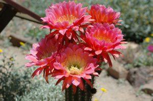Spring in the desert!