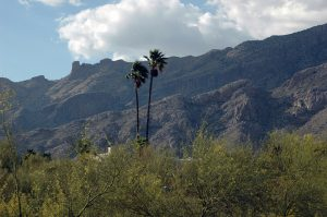 View of Tucson Mountains in front of Mom's house.
