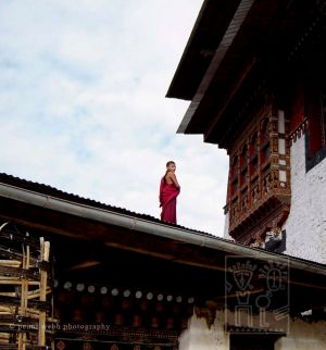 21. Monk on the Roof wm.jpg