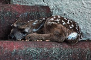 New born deer 2-26.jpg