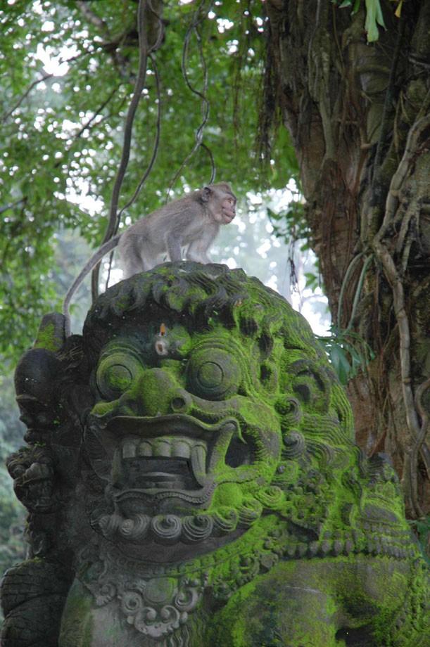 Lion & Monkey
