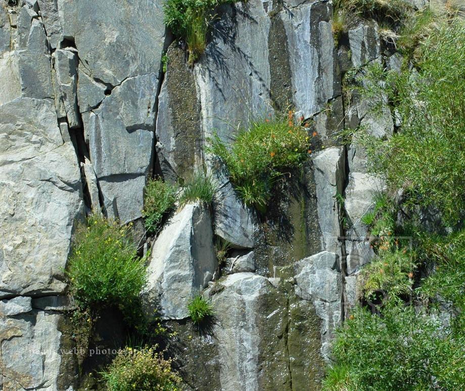 Yosemite_Wall_53_W_wm