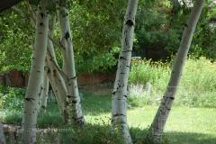 Taos_Aspens_27_dpi_72_wm