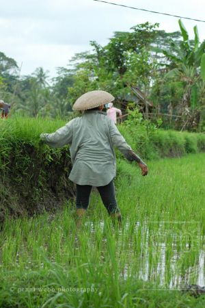 Rice paddie worker 104 9 wm.jpg