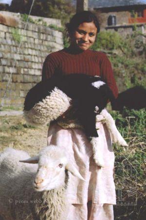 Lambs_H.jpg